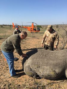 Working Rhinos in Our R44
