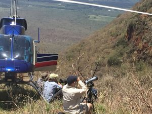 Professional birding census organisation searching for the rare Taita Falcon